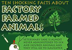 10 Shocking Facts About Factory Farmed Animals